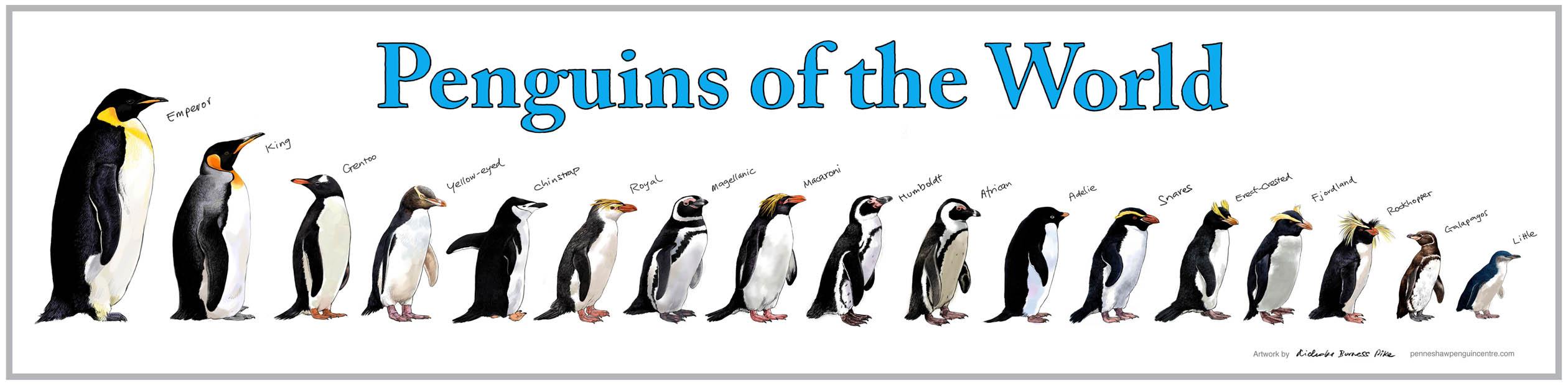 penguinsoftheworldposter30